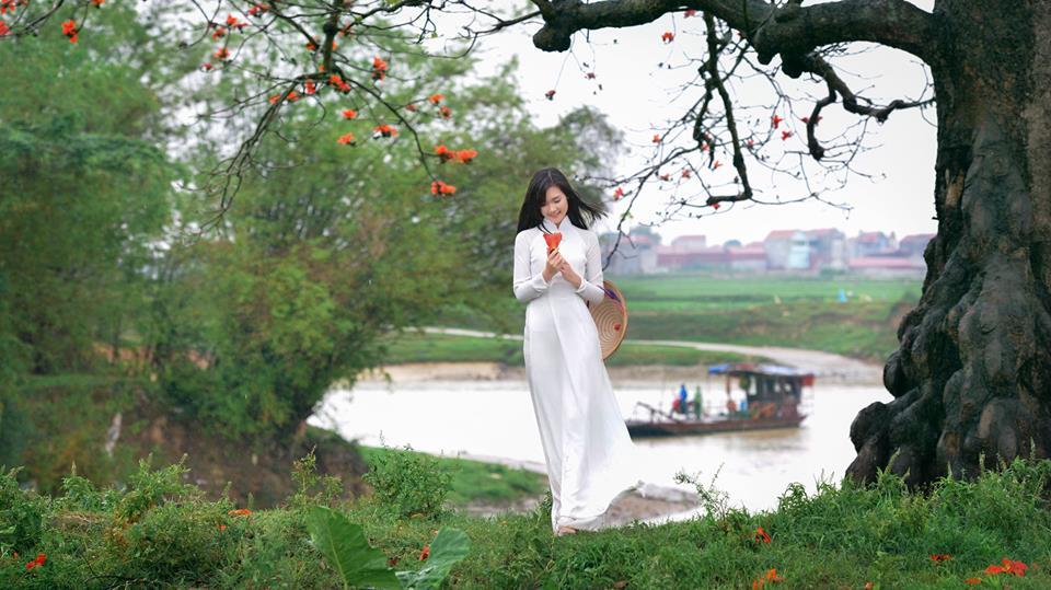 Hoa gạo | Đinh Văn Linh