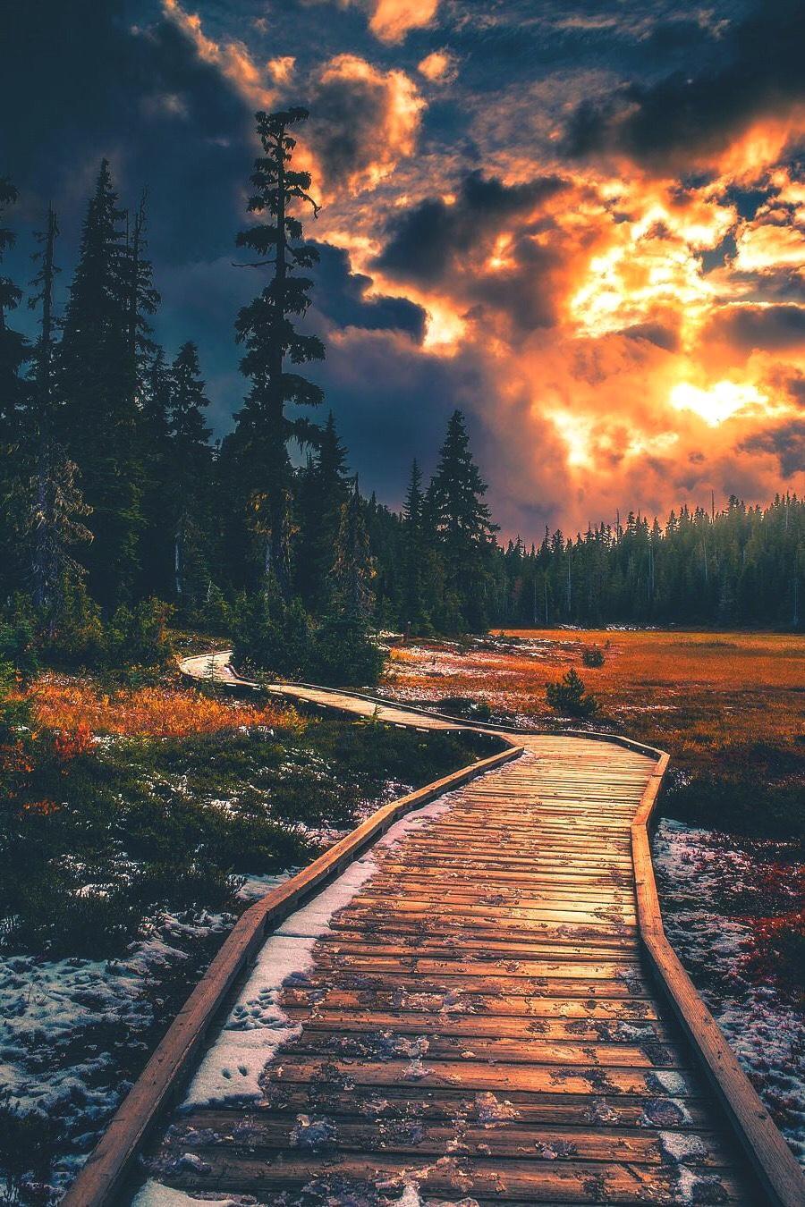 Công viên Strathcona, Canada