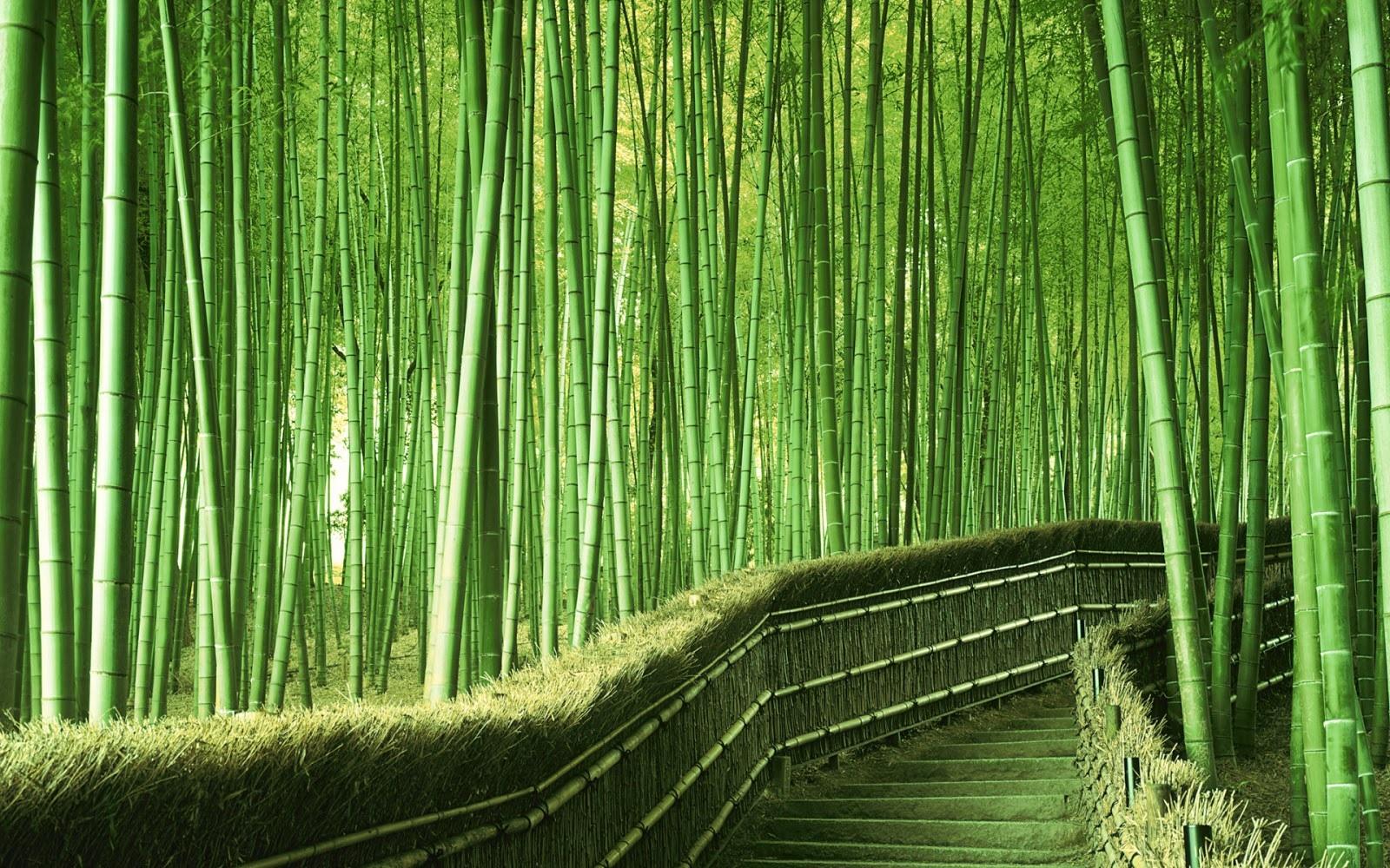 Rừng tre Nhật Bản